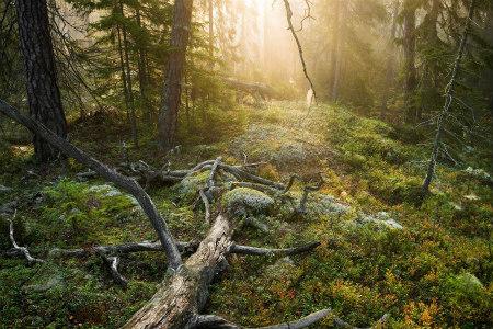 Woodland in Tyresta National Park